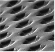 Cytoplast® dPTFE – Membrana nieresorbowalna dPTFE