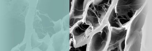 Membrana BoneProtect© - Naturalna membrana kolagenowa